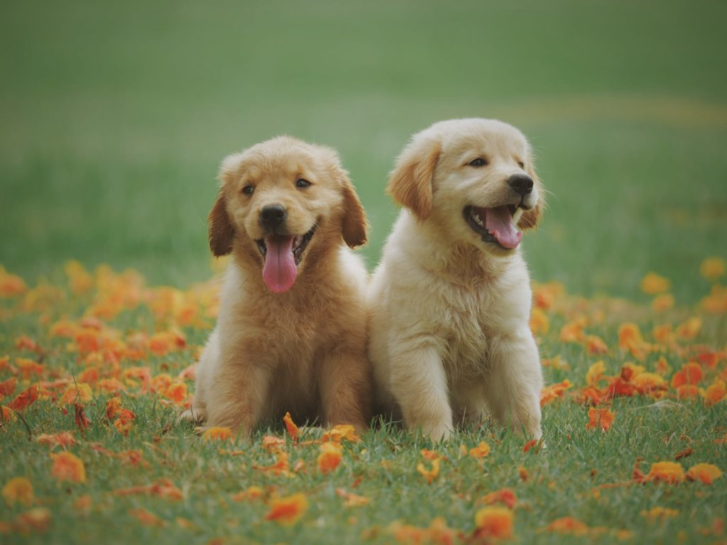 Two puppies who are friends
